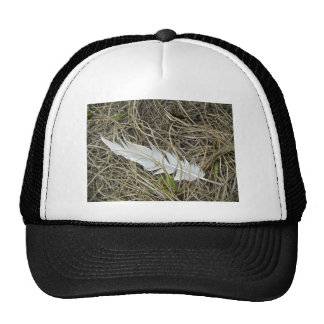 Feather in your Cap