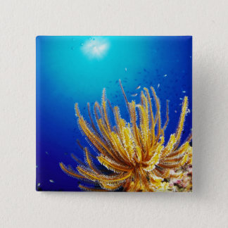 Feather star 15 cm square badge
