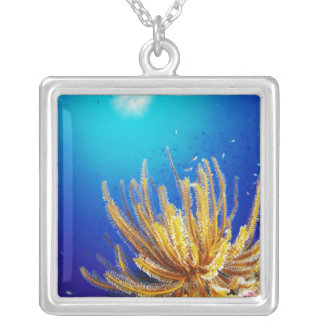 Feather star silver plated necklace