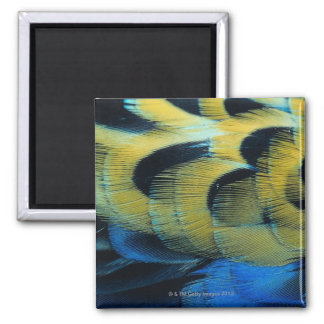 Feather surface 4 square magnet