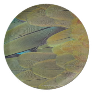 Feather surface plate