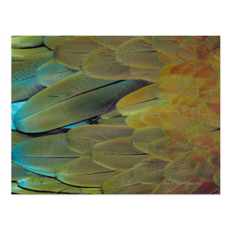 Feather surface postcard