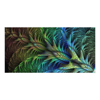 Feather tail Photo