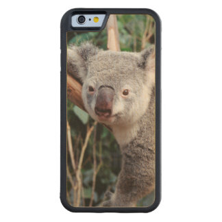 Featherdale Wildlife Park, Koala Bears Carved Maple iPhone 6 Bumper Case