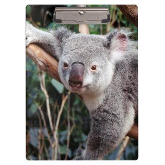 Featherdale Wildlife Park, Koala Bears Clipboard