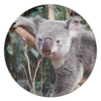 Featherdale Wildlife Park, Koala Bears Dinner Plates