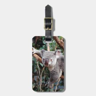 Featherdale Wildlife Park, Koala Bears Luggage Tag