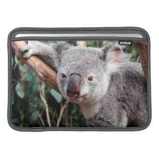 Featherdale Wildlife Park, Koala Bears MacBook Sleeve