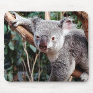 Featherdale Wildlife Park, Koala Bears Mouse Mat
