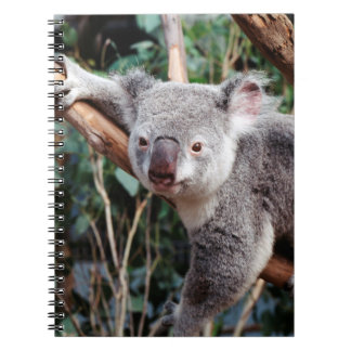 Featherdale Wildlife Park, Koala Bears Note Book
