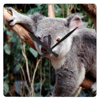 Featherdale Wildlife Park, Koala Bears Square Wall Clock
