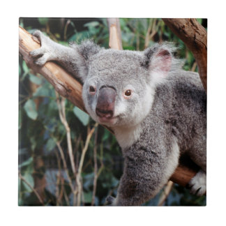 Featherdale Wildlife Park, Koala Bears Tile