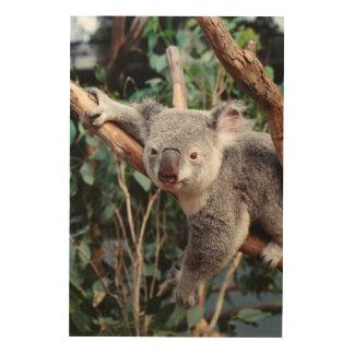 Featherdale Wildlife Park, Koala Bears Wood Wall Decor