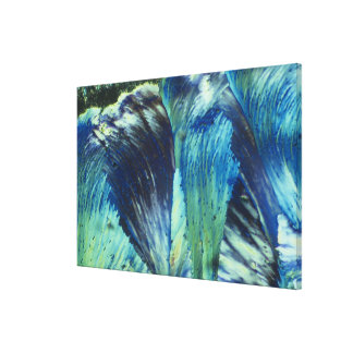 Feathered Canvas Prints