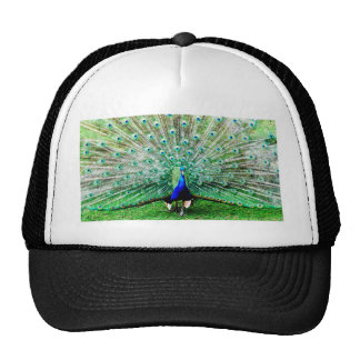 Feathers Cap