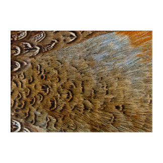 Feathers Of A Ring-Necked Pheasant Acrylic Wall Art