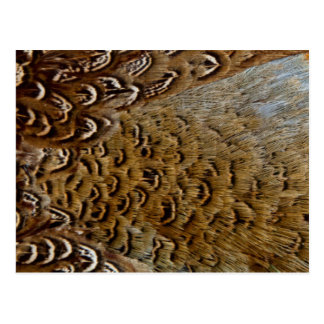 Feathers Of A Ring-Necked Pheasant Postcard