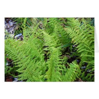 """""""Feathery Ferns"""" Card"""