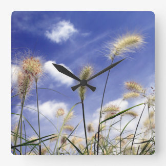 Feathery Grasses against a Summer Sky Square Wall Clock