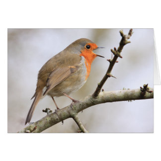 February Robin Card