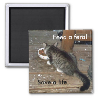 """""""Feed a Feral, Save a Life"""" feral kitten magnet"""