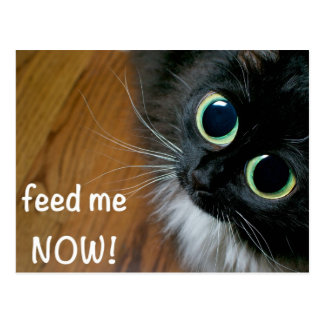 feed me NOW! Post Card