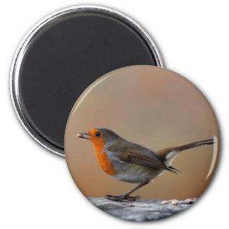 Feeding Robin Magnet