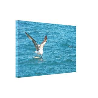 Feeding seagull. canvas print