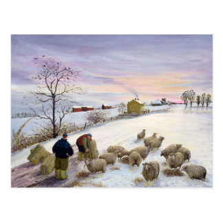 Feeding sheep in winter postcard