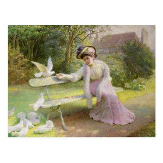 Feeding the Doves Postcard