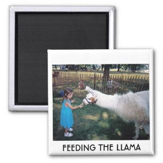 FEEDING THE LLAMA MAGNET