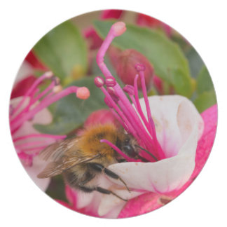 Feeding Time Party Plates