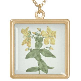 Feel-Fetch (Hypericum quartinianum) (w/c over grap Gold Plated Necklace