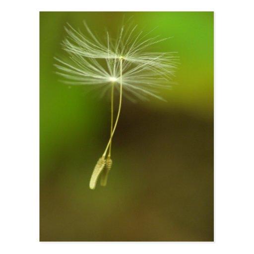 Feel free - flying Dandelion seeds Postcards