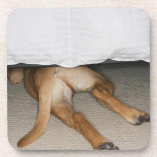 Feet and tail of yellow lab dog hidden under bed coaster
