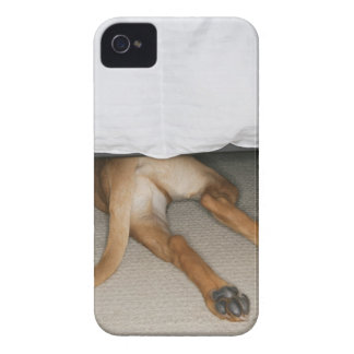 Feet and tail of yellow lab dog hidden under bed iPhone 4 cover