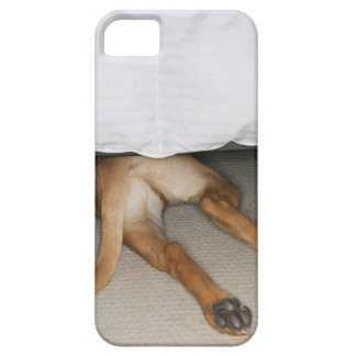 Feet and tail of yellow lab dog hidden under bed iPhone 5 cover