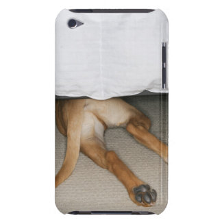 Feet and tail of yellow lab dog hidden under bed iPod touch covers