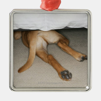 Feet and tail of yellow lab dog hidden under bed Silver-Colored square decoration