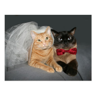 Feline bride and groom postcard