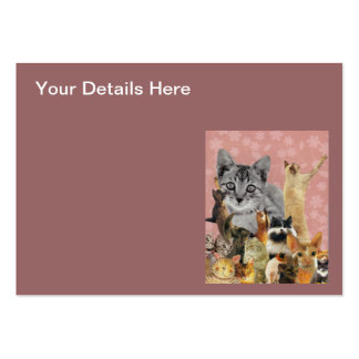 Feline Follies Pack Of Chubby Business Cards