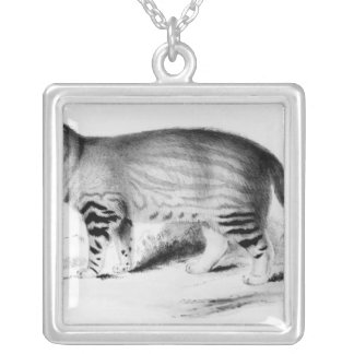 Felis Pajeros, plate 9 Silver Plated Necklace