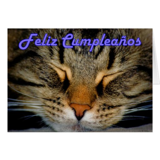 Feliz Cumpleaños Spanish Birthday with kitty cat Cards