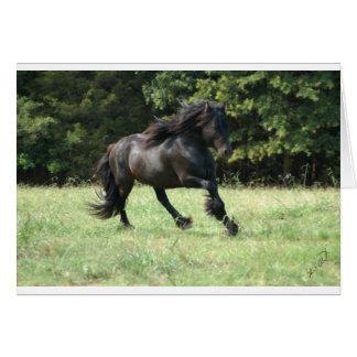Fell Pony Stallion Card
