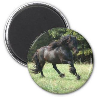 Fell Pony Stallion Magnet