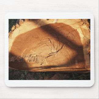 Felled tree trunk close-up mouse pad