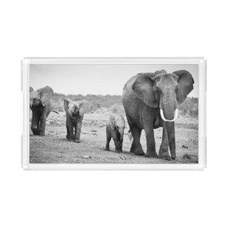 Female African elephant and three calves, Kenya.
