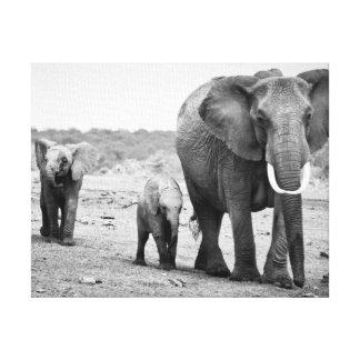 Female African elephant and three calves, Kenya. Canvas Print