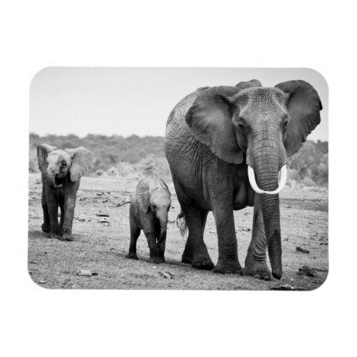 Female African elephant and three calves, Kenya. Flexible Magnet