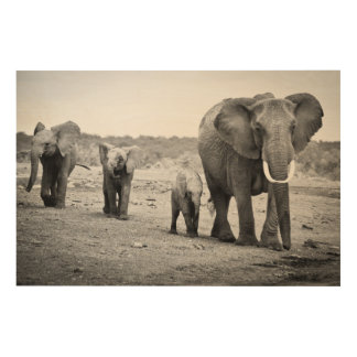 Female African elephant and three calves, Kenya. Wood Wall Art